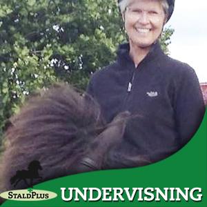 UNdervisning groundwork, horsemannship centreret ridning, enetimeridning