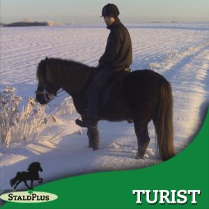 Ridning som turist på islandske heste, også for nybegyndere